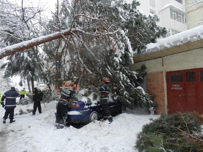 copac cazut peste masina Botosani