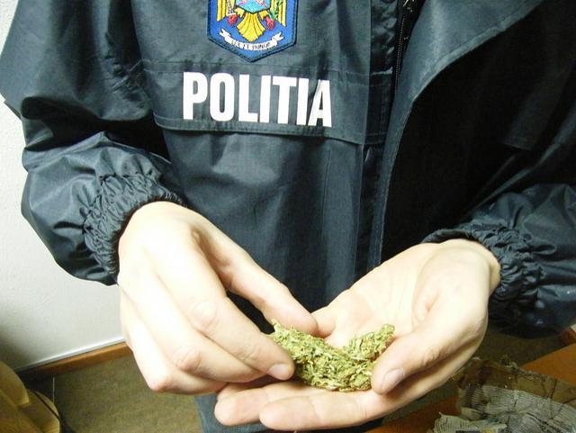 trafic de droguri, politia, botosani, stiri, diicot