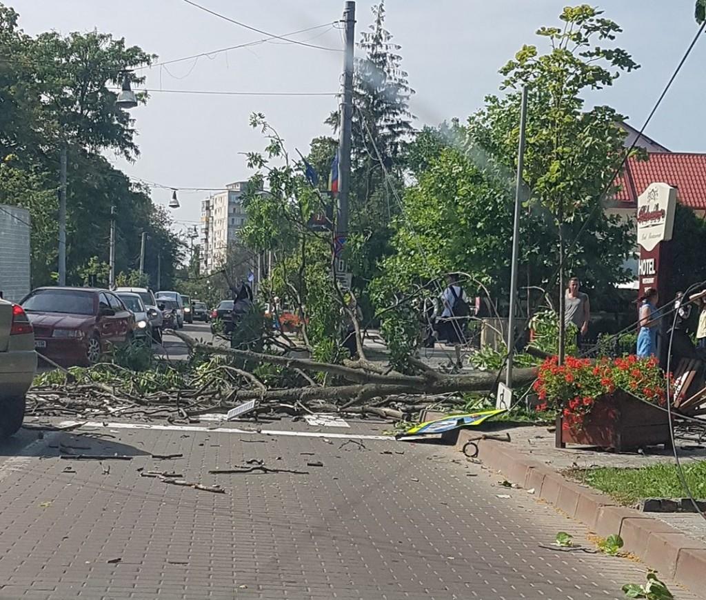 copac cazut pe bulevardul mihai eminescu botosani