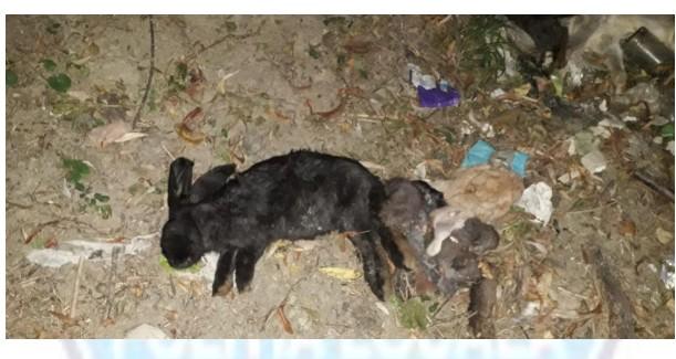 iepuri morti, stiri, botosani, zona de agrement cornisa